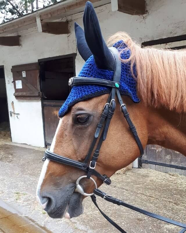 bonnet équitation